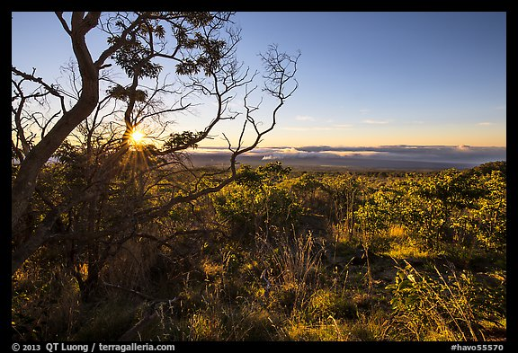 Sunrise from Mauna Loa overlook. Hawaii Volcanoes National Park (color)