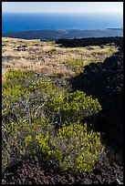 Grass patch bordering barren aa lava flow. Hawaii Volcanoes National Park, Hawaii, USA. (color)