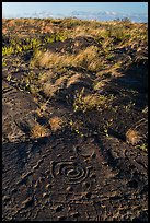 Archaeological site of Puu Loa. Hawaii Volcanoes National Park, Hawaii, USA. (color)