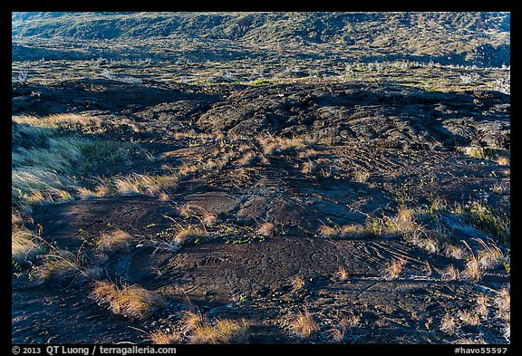 Petroglyphs created on the lava substrate. Hawaii Volcanoes National Park (color)