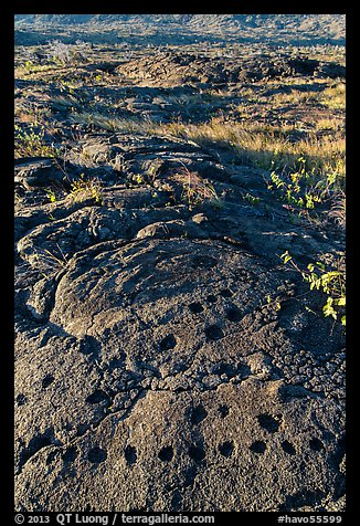 Petroglyph with motif of cupules and holes. Hawaii Volcanoes National Park (color)