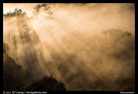 Trees and sunrays in volcanic steam. Hawaii Volcanoes National Park (color)