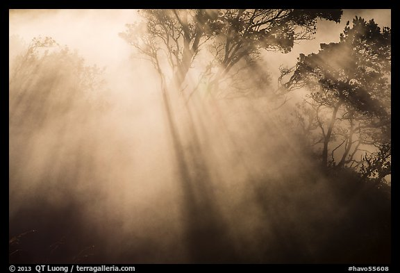 Backlit trees and sun rays in thermal steam. Hawaii Volcanoes National Park (color)