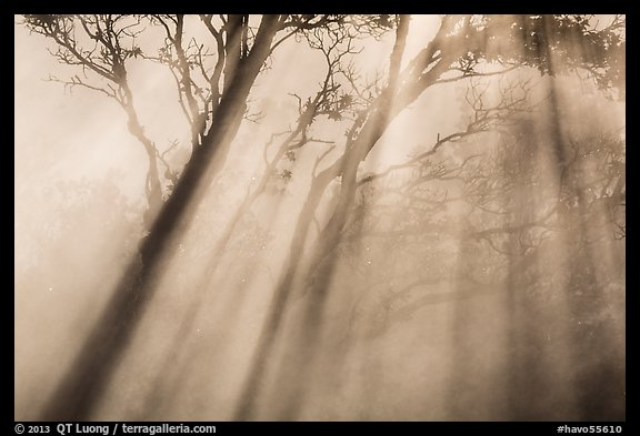 Trees and sunrays, Steaming Bluff. Hawaii Volcanoes National Park (color)