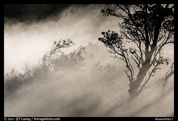 Trees and volcanic steam, Steaming Bluff. Hawaii Volcanoes National Park (color)