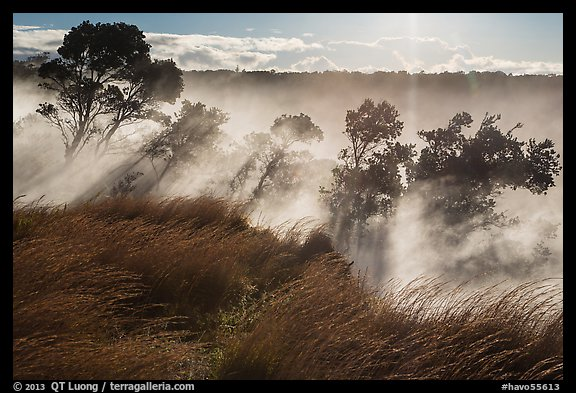 Grasses and trees, Steaming Bluff. Hawaii Volcanoes National Park (color)