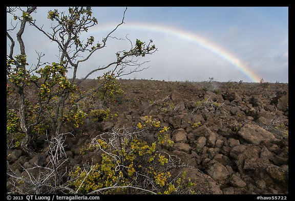 Ohelo shrub, lava field, and rainbow. Hawaii Volcanoes National Park (color)