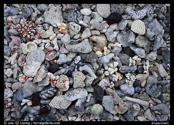 Beached coral, Tau Island. National Park of American Samoa (color)