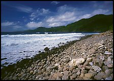 Beached coral heads and Vatia Bay, mid-day, Tutuila Island. National Park of American Samoa ( color)