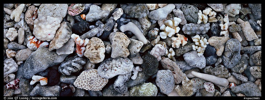 Close-up detail of beached coral, Tau Island. National Park of American Samoa (color)