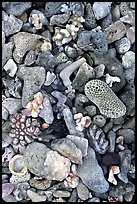 Beached coral, Tau Island. National Park of American Samoa