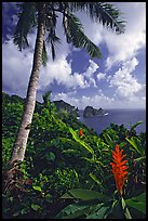 Palm tree and wild ginger along the road from Afono to Vatia, Tutuila Island. National Park of American Samoa