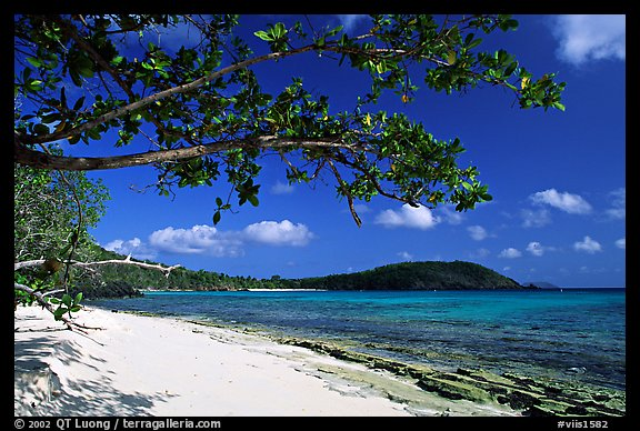 Tropical Almond (Terminalia catappa), beach on Hawksnest Bay. Virgin Islands National Park (color)