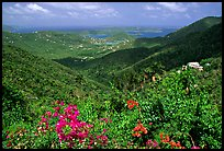 Tropical flowers and forest from Centerline road. Virgin Islands National Park, US Virgin Islands.