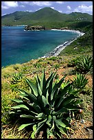 Agave on Ram Head. Virgin Islands National Park, US Virgin Islands. (color)
