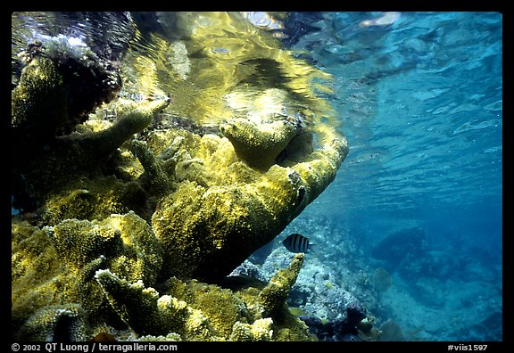 Coral and water surface. Virgin Islands National Park (color)