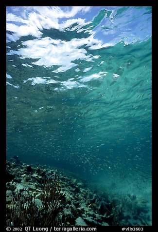 Water surface and fish over reef. Virgin Islands National Park (color)