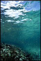 Water surface and fish over reef. Virgin Islands National Park, US Virgin Islands. (color)