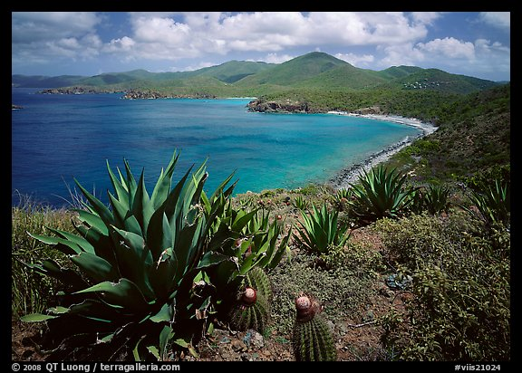 Agaves and cactus, and turquoise waters, Ram Head. Virgin Islands National Park (color)