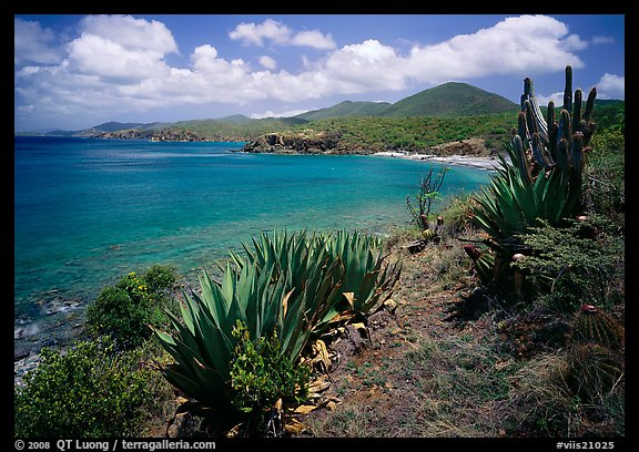 Agave on Ram Head. Virgin Islands National Park (color)