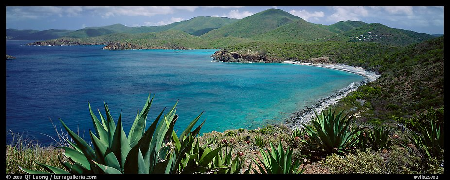 Agave plants growing on drier part of island. Virgin Islands National Park (color)