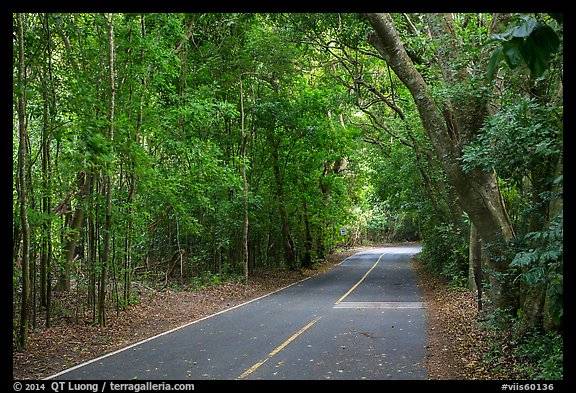 North Shore road. Virgin Islands National Park (color)