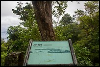 Tree obscuring view, interpretive sign. Virgin Islands National Park, US Virgin Islands.