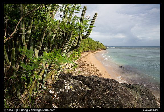 Cactus and Reef Bay. Virgin Islands National Park (color)