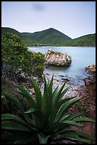 Agave, rock, Great Lameshur Bay. Virgin Islands National Park ( color)
