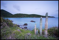Cactus, Great Lameshur Bay from Yawzi Point. Virgin Islands National Park ( color)