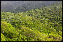 Forested hillside. Virgin Islands National Park ( color)