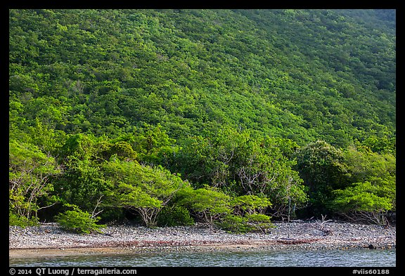 Steep green hillside above Great Lameshur beach. Virgin Islands National Park (color)