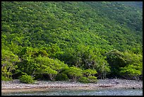 Steep green hillside above Great Lameshur beach. Virgin Islands National Park ( color)