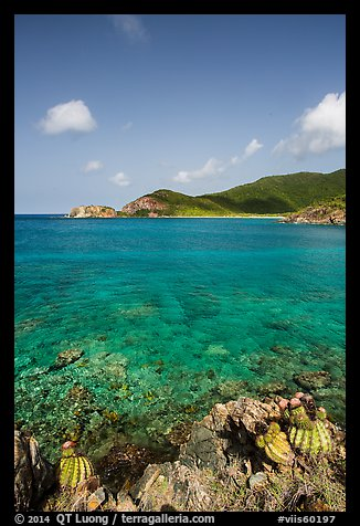Turk cap cactus and turquoise waters, Little Lameshur Bay. Virgin Islands National Park (color)