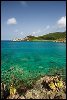 Turk cap cactus and turquoise waters, Little Lameshur Bay. Virgin Islands National Park ( color)