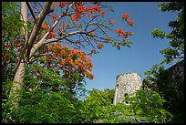 Tower framed by Royal Poinciana tree, Annaberg Sugar Mill ruins. Virgin Islands National Park ( color)