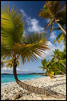 Tropical beach with palm trees, Salomon Bay. Virgin Islands National Park ( color)