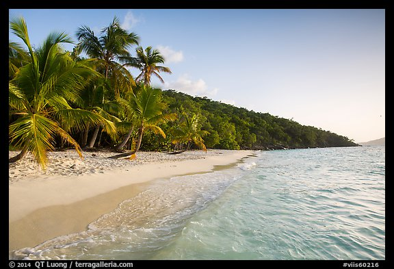 Clear waters and palm trees in the evening, Salomon Beach. Virgin Islands National Park (color)