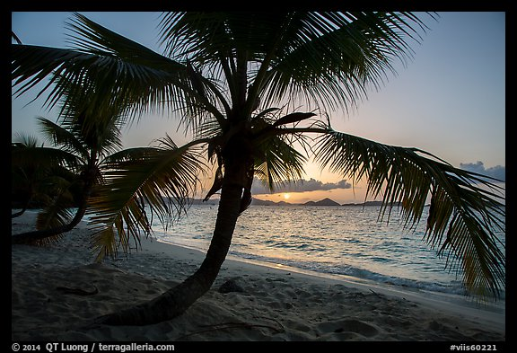 Palm tree and sunset, Salomon Beach. Virgin Islands National Park (color)