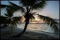 Palm tree and sunset, Salomon Beach. Virgin Islands National Park ( color)