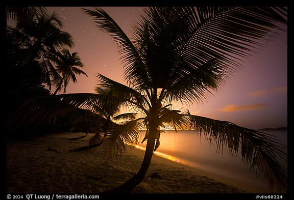 Palm tree and lights of St Thomas, Salomon Beach. Virgin Islands National Park (color)
