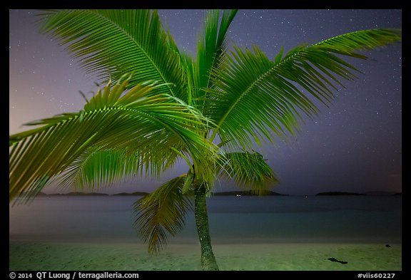 Palm tree and beach at night, Salomon Beach. Virgin Islands National Park (color)