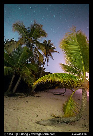 Palm trees on beach at night, Salomon Beach. Virgin Islands National Park (color)