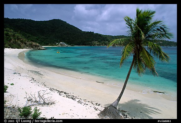 Beach and palm tree in Hurricane Hole Bay. Virgin Islands National Park (color)