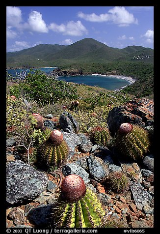 Cactus on Ram Head. Virgin Islands National Park (color)