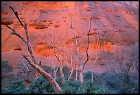 Trees at the base of the Olgas. Olgas, Uluru-Kata Tjuta National Park, Northern Territories, Australia