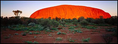 Ayers rock with sunrise glow. Uluru-Kata Tjuta National Park, Northern Territories, Australia (Panoramic color)