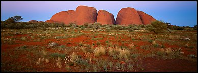 Olgas rocks at twilight. Olgas, Uluru-Kata Tjuta National Park, Northern Territories, Australia (Panoramic color)