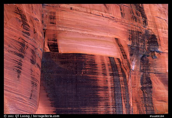 Desert vanish on a rock wall in  Kings Canyon,  Watarrka National Park. Northern Territories, Australia (color)