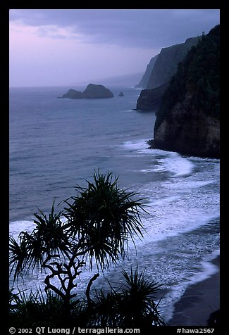 Untamed coast of the North shore from Polulu Valley overlook, dusk. Big Island, Hawaii, USA (color)